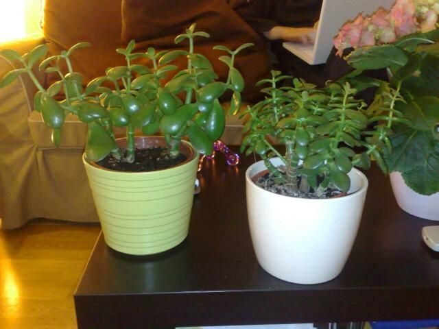 jannys-pengeplanter.jpg
